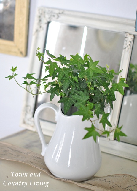 Green Ivy in Ironstone Pitcher