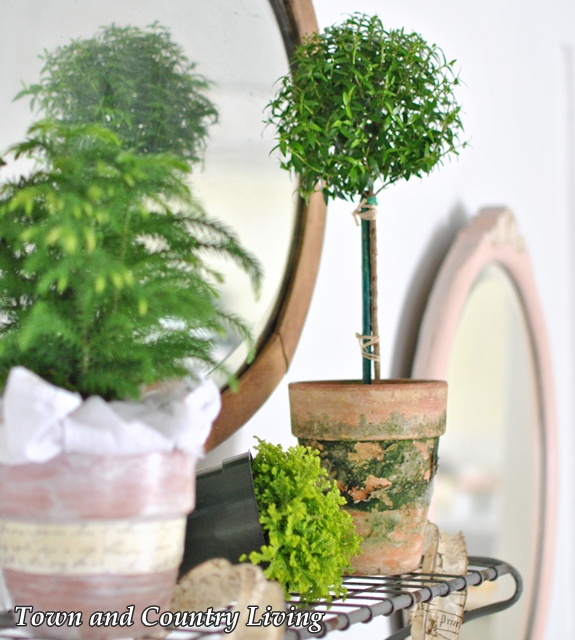 Topiary and Fern Moss