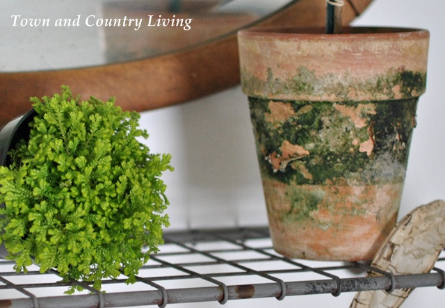 Fern Moss and Clay Pot