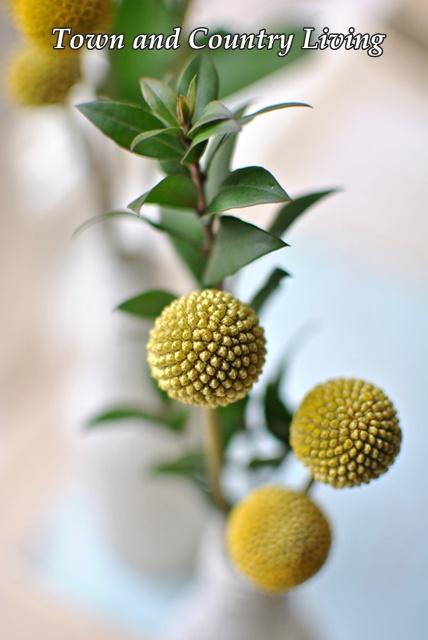 Yellow Pom Flowers