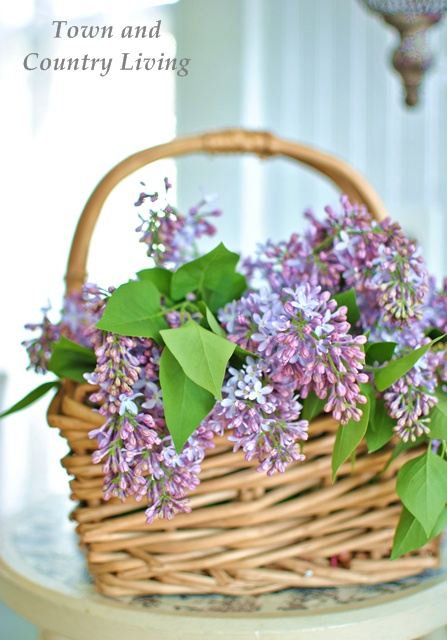 Basket of Lilacs