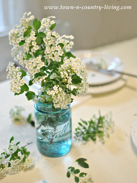 Bridal Wreath branches in a blue Ball mason jar