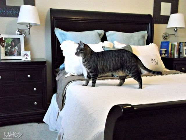 Mrs Hines Cat in Bedroom - http://www.mrshinesclass.com