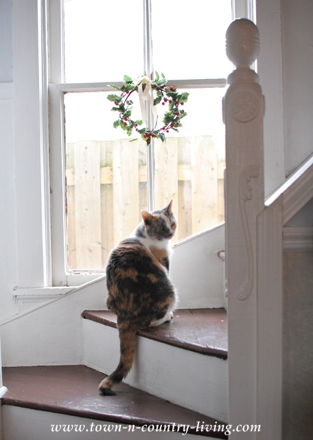 Farmhouse Cat via Town and Country Living