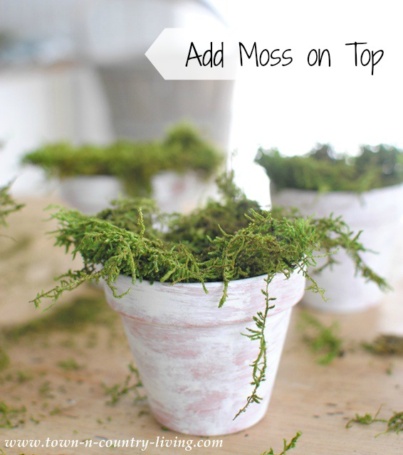 How to Make Mossy Pots by Town and Country Living
