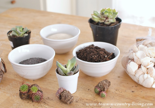 Supplies for globe terrariums