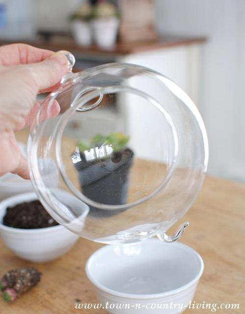Glass globe for making a hanging terrarium
