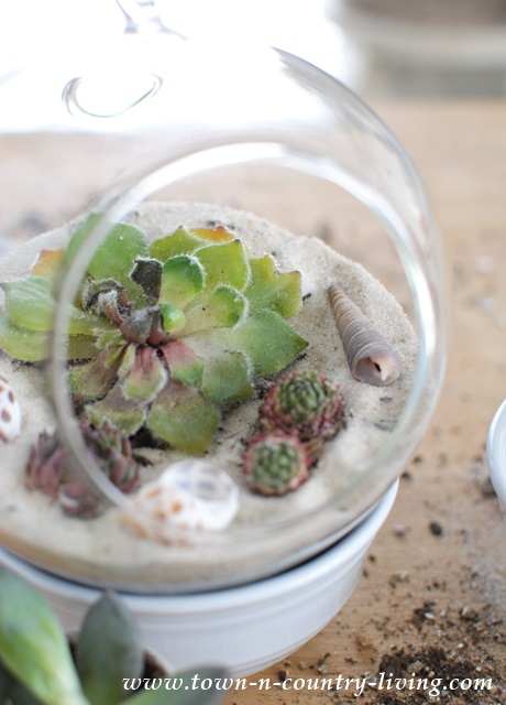 DIY Terrarium via Town and Country Living