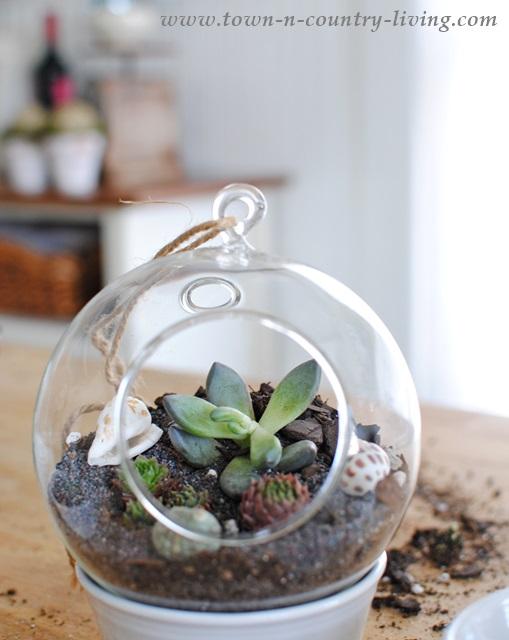 Make Your Own Globe Terrariums