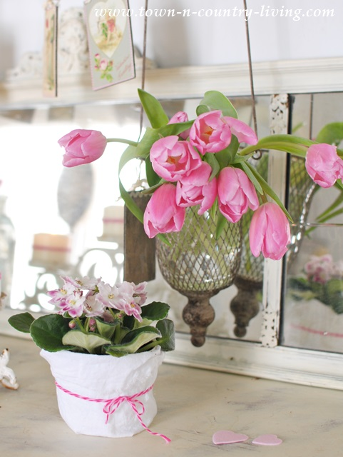 Pink Tulips and an African Violet