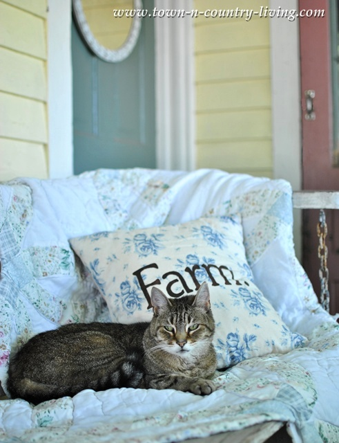 Farmhouse Cat on a Front Porch Swing