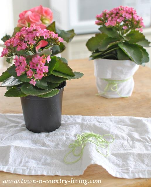 Wrapping a garden pot with a tea towel
