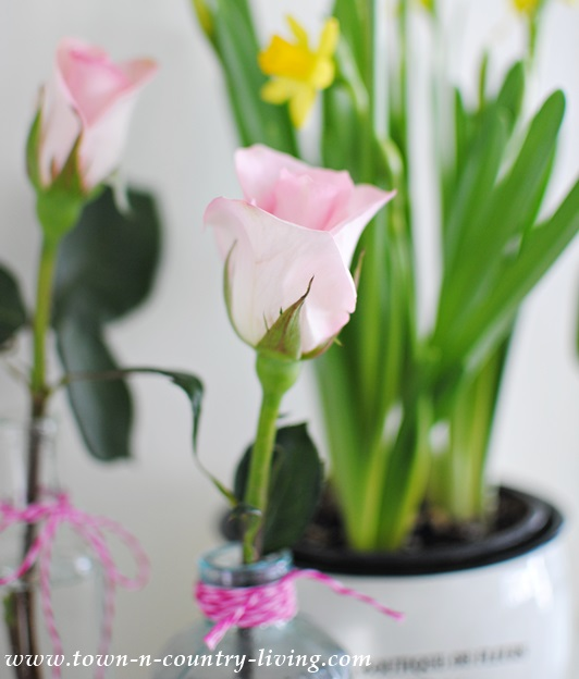 Single stemmed rose