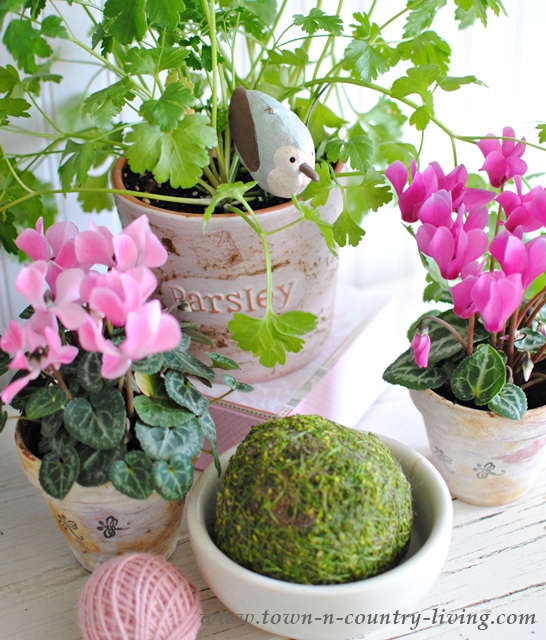 Pink Flowers and Moss Ball Create Spring Vignette