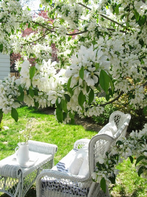 Springtime blossoms in the garden with wicker furniture