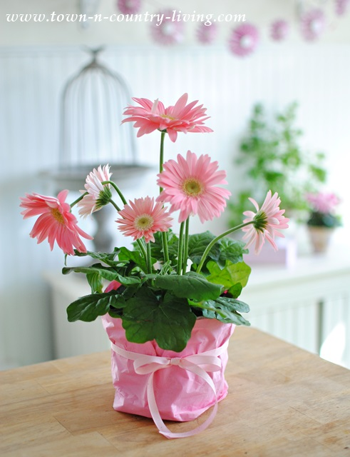 Wrapping Potted Flower with Tissue Paper for Spring Vignette