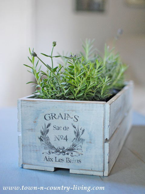 Lavender in Painted French Crate