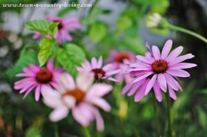 Enjoying My Garden in July