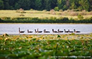 A Day at Lake Shabbona