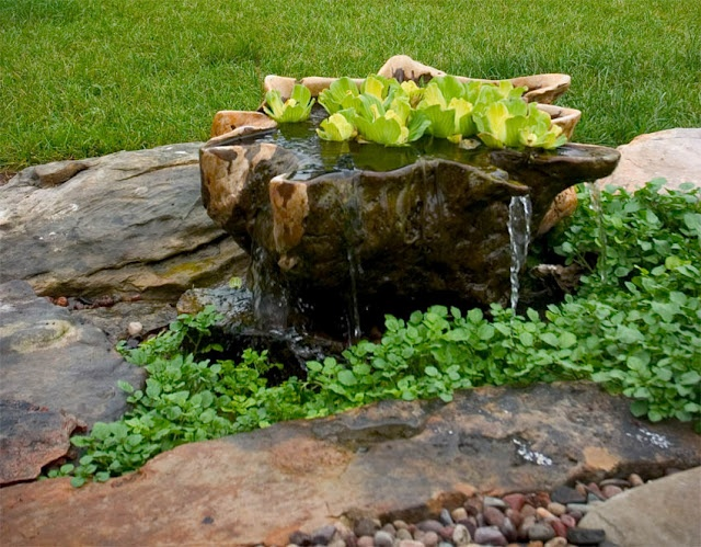 Create Your Own Container Water Garden Town Country Living