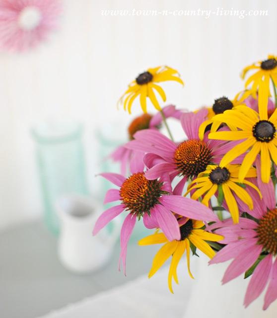 Garden Flowers, coneflowers and rudbeckia