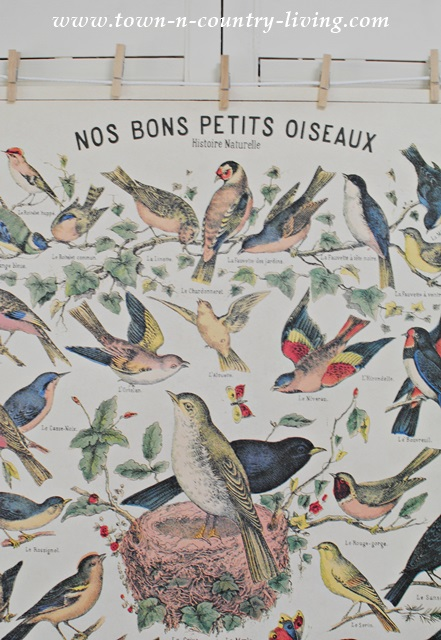 "Vintage Bird Poster - ""Our Good Birds"" in French"