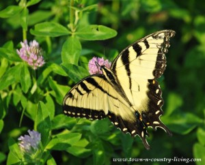A Nature Walk with the Butterflies