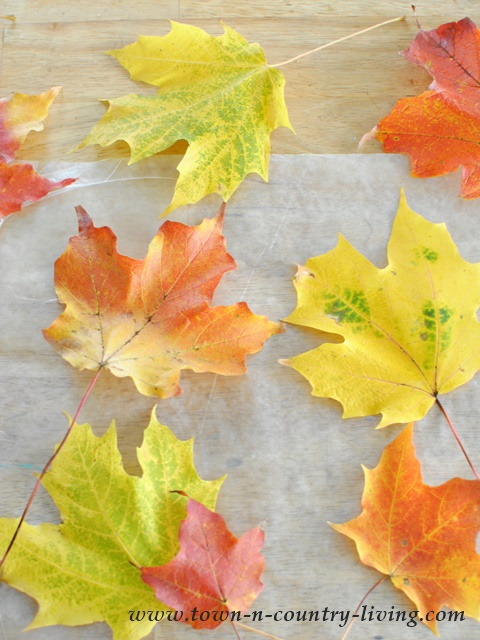 Collect colorful Fall leaves for crafting a table setting