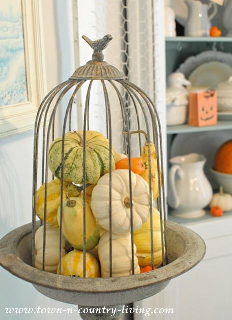 Gourds in Wire Cloche
