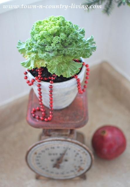 Christmas Kale