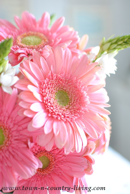Why i love pink gerbera daisies town country living beautiful pink gerbera daisies mightylinksfo