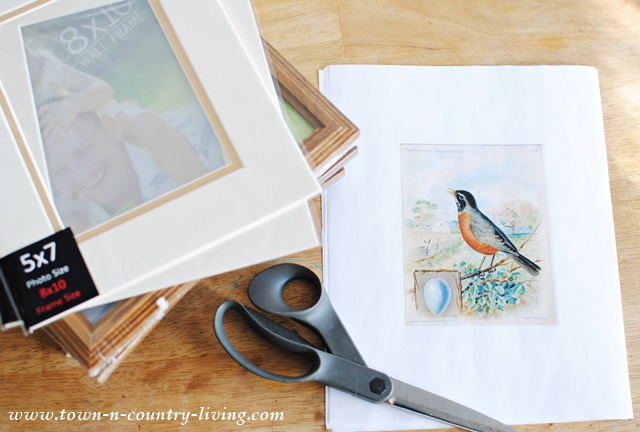 Supplies for framing bird prints, which are free for you to download and frame.