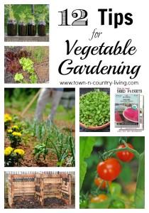 12 Vegetable Gardening Tips