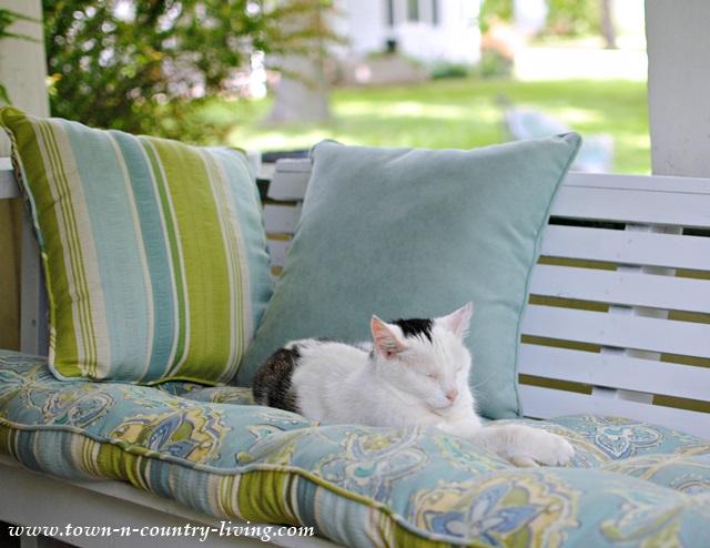 Kitty sleeping on farmhouse porch glider