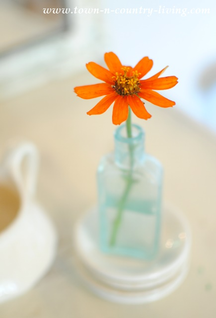Zinnia in Vintage Aqua Bottle