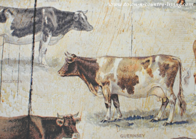 Farmhouse Cow Print