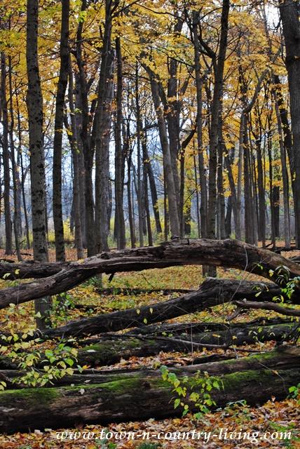 Fall-Trail-10