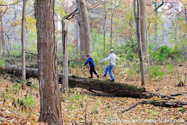 Exploring Fall Nature