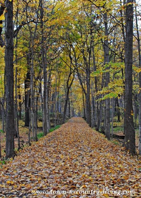 Fall-Trail