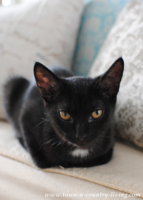 Black Kitten in a Cozy Farmhouse