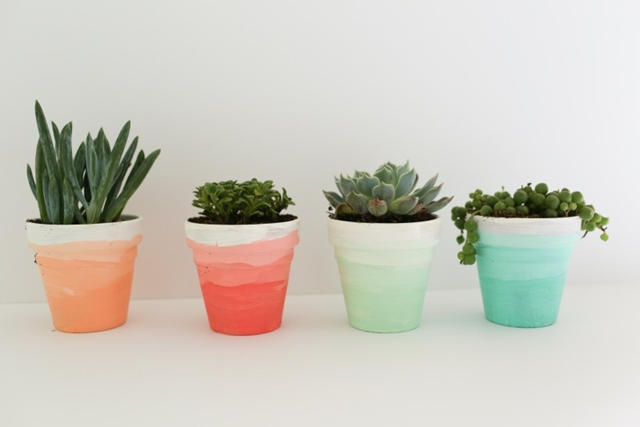 Decorating with Succulents using Ombre Pots