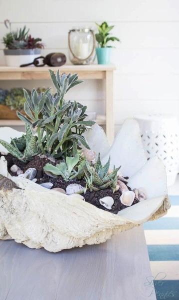 Sea Shell Succulent Planter