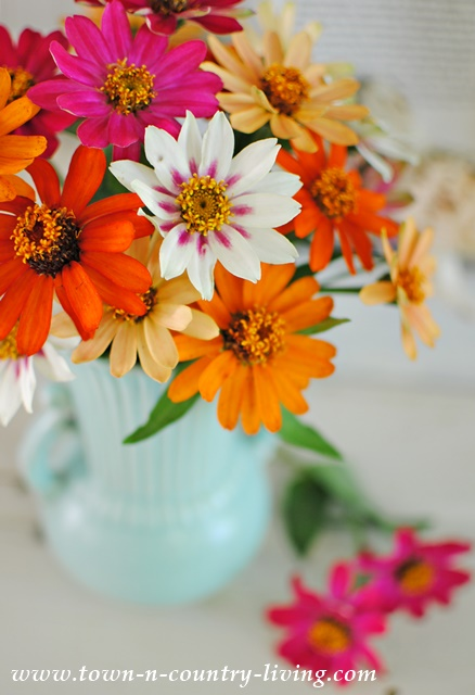 Colorful Bouquet of Zinnias in Vintage Aqua Vase
