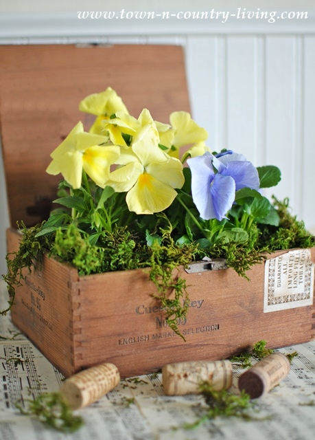 Pansies in a Cigar Box and Other Farmhouse Flowers