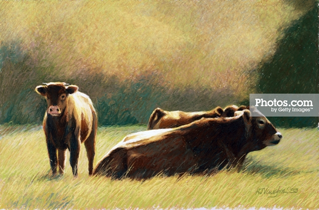 Cow Drawing and Other Wall Art Ideas