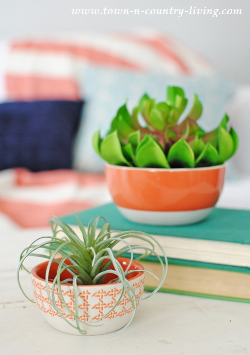 Air Plant and Succulent