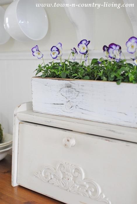 Cheerful Violas Make a Spring Vignette