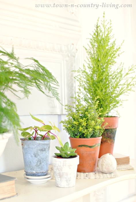 Botanic Plants on a Spring Mantel