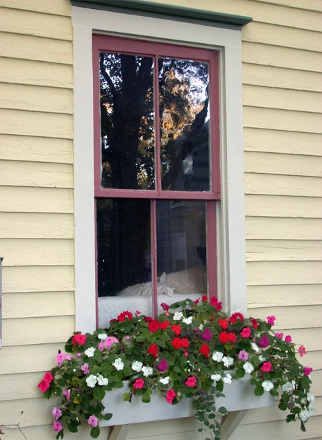 Window Box Filled with Impatiens