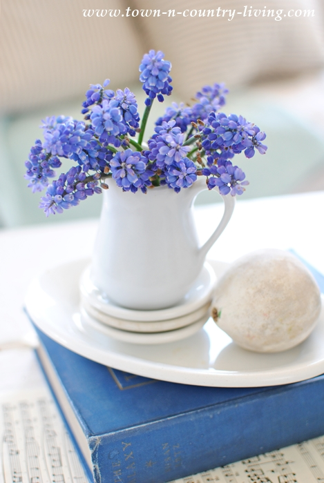 Grape Hyacinths in Mini Ironstone Pitcher